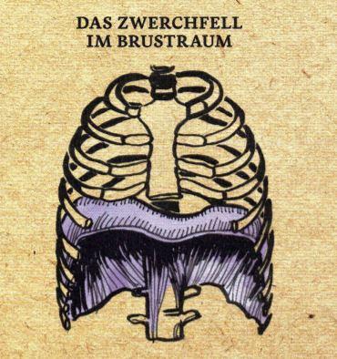 Zwerchfell
